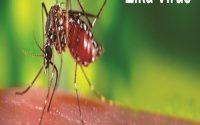 cach phong chong benh zika