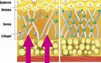 Collagen là gì và có tác dụng như thế nào