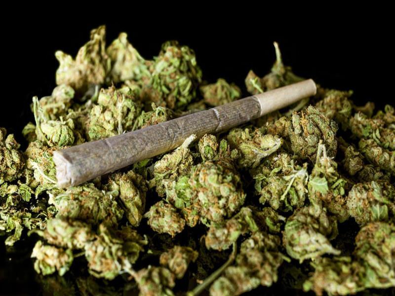 Nhiều người nghĩ rằng cần sa không gây hại bằng ma túy