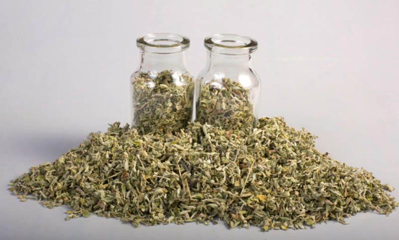 Sử dụng trà chiết xuất từlá damiana cũng là một trong những cách được nhiều chị em phụ nữ lựa chọn.