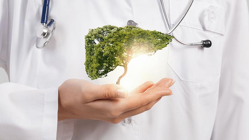 Rất nhiều cách giải độc gan từ thiên nhiên hiệu quả