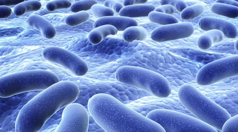 Bào tử lợi khuẩn chính là vi khuẩn sống có lợi cho cơ thể