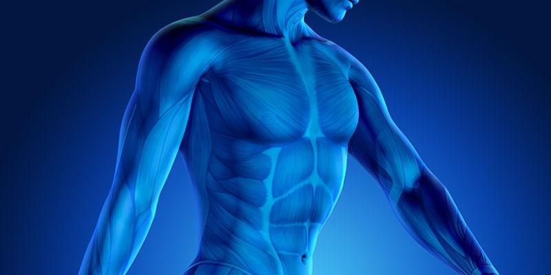 Hormone là yếu tố ảnh hưởng đến quá trình đạt định của phái mạnh