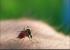 Cách diệt muỗi anophen hiệu quả, an toàn cho sức khỏe cả nhà
