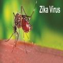 Vius Zika là gì và cách phòng chống bệnh