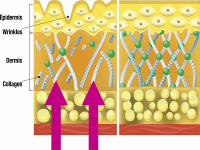 Collagen là gì và có tác dụng với cơ thể như thế nào