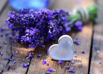 Bất ngờ với công dụng tuyệt vời của hoa lavender