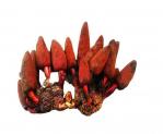 Nấm ngọc cẩu: Lọa nấm bổ thận tráng dương, tăng sinh lý phái mạnh