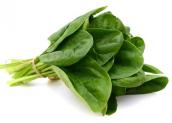 Rau chân vịt – Loại thảo dược cực tốt với sức khỏe