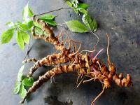 Top 10 cây thuốc thiên nhiên trị bệnh hiệu quả nhất